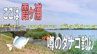 #58 霞ヶ浦水系 ウワサのタナゴ(オオタナゴ)釣り【小物釣り_micro fishing channel_微物釣遊】