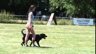 Rottweiler Schutzhund 3 - Protection