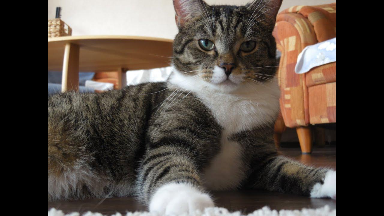 Katzen Bilder Tigger der Entspannte