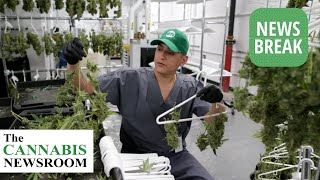 Reports Alleges Green Thumb Industries Under Federal Investigations