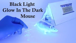 csi-mouse-using-black-lights-the-rodent-tracker-to-identify-access-holes-mousetrap-monday