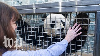 Bei Bei says goodbye to the U.S. and his beloved zookeeper