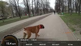 Что будет если с собакой разогнаться на максимальную скорость,