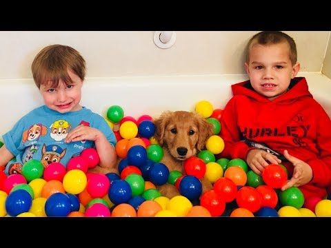 Golden Retriever PUPPY Plays in Ball Pit! Water Fun