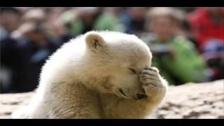 Funny animals - zwierzaki i głos zabawne śmieszne zwierzęta