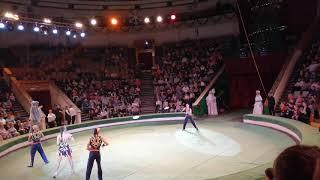 Цирк. Шоу слонов.Большой Варшавский цирк. 7 января 2019г.