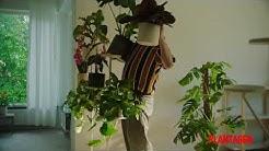 Kasveja, jotka viihtyvät kotonasi, -25–50%