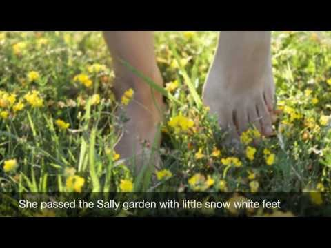 Sally Gardens Piano Accompaniment With lyrics