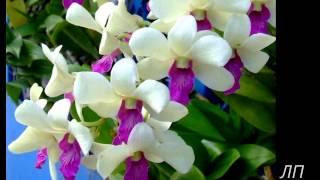 Дети - цветы в жизни нашей...(Музыка, дети - и 15 минут отдыха!)