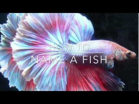 How To: Name A Fish