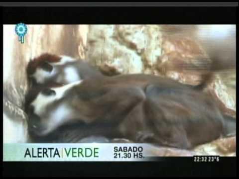 C5N - PROGRAMACION: ADELANTO ALERTA VERDE 23-05-2015