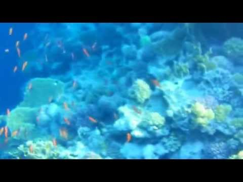 Snorkeling a Sharm El Sheikh con Galaxy Note 2 (1)
