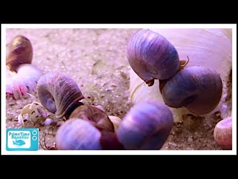 How To Get Rid Of Snails In Your Fish Tank