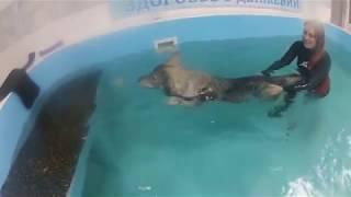 Щенок хаски учится плавать. Урок 2. Готовимся к лету))