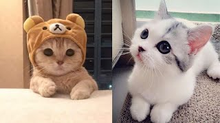 Cute kittens compilation of cutest animal videos in the world