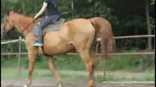 Melisa - Nowy Buczek,12r. Konie