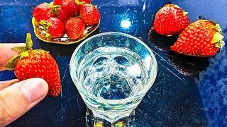 Put Strawberries in Salt Water, See What Happens Next