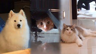 Download 낯선 사람들이 왔을 때 강아지와 고양이의 반응