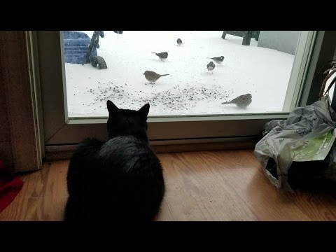 cat watching birds eat seed in the snow [32 minutes]