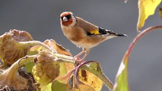 "Peaceful Relaxing Instrumental Music, Meditation Soft Music ""September Song Birds"" by Tim Janis"