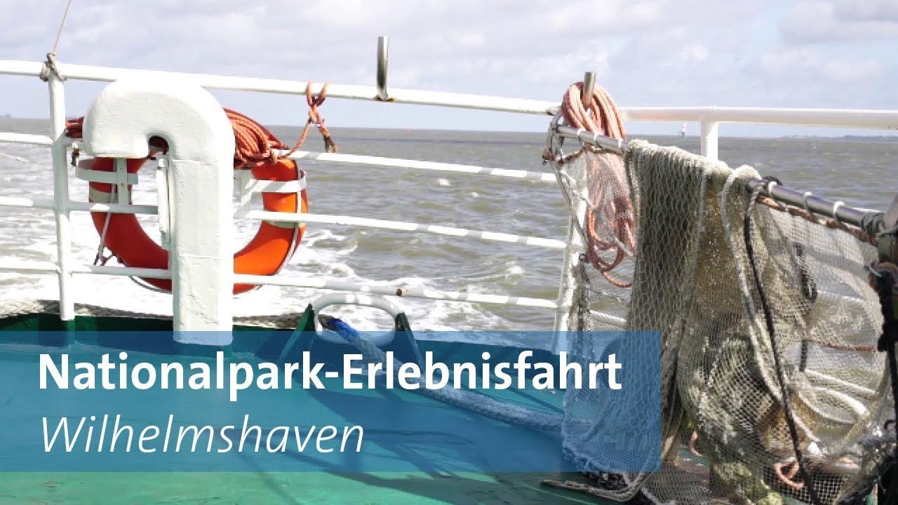 Seehundbänke in der Nordsee mit dem Schiff erkunden - YouTube