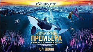 Водное шоу «Сон в летнюю ночь» в Москвариуме