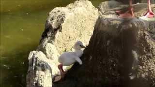 5日ぶりにフラミンゴを見に行ってきました。 新しく二羽のベニイロフラ...