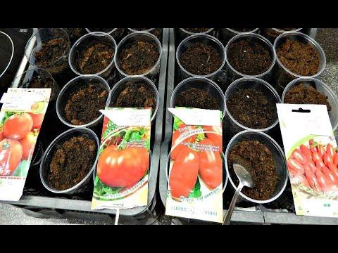 Вопрос: Когда сажать на рассаду томаты в Калининградской области?