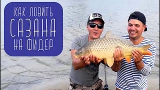 Летняя ловля сазана / Фидер / Сазан / Дон  / Карпфишинг / Сазан Фидер
