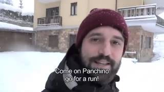 Почему чихуа-хуа не бегают по снегу?