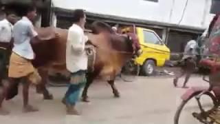 Pagla Baba Going Home