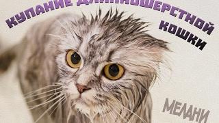 Как купать породистую кошку с длинной шерстью