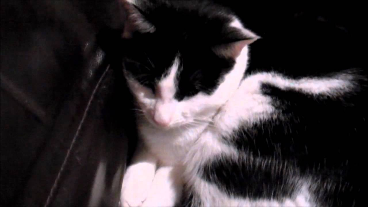 koopa cat movie sequel
