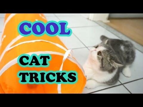 Https Funny Com Kaiser The Amazing Bengal Amazing Cat Tricks