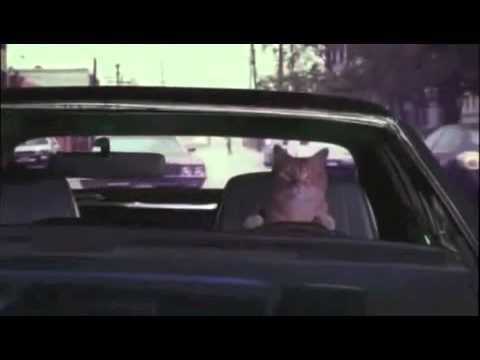 Geico Dogs Chase Cats