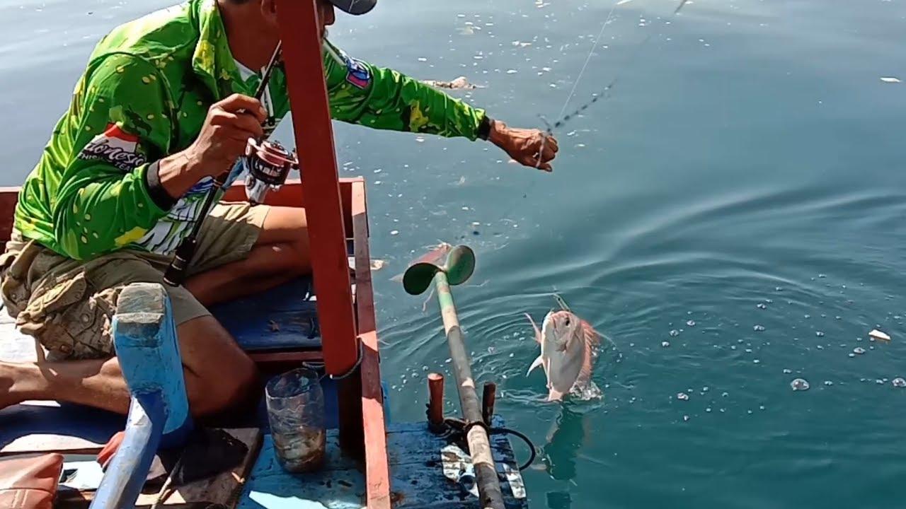 Mancing Ikan Kakap Merah Besar - Umpan Udang