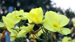 flowers(, 2011-08-18T05:43:17.000Z)