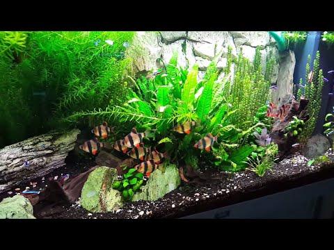 All Aquarium update! Fishroom tour! New Camera better picture quality.