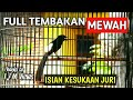 Variasi Tembakan Murai Batu Gacor Full Isian Kasar Panjang Mewah  Mp3 - Mp4 Download