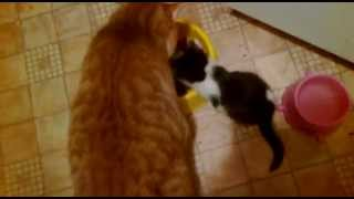 Kotki jedzą z jednej miseczki ....