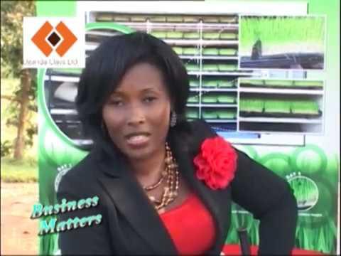 FODDER SYSTEM PRODUCTION UGANDA
