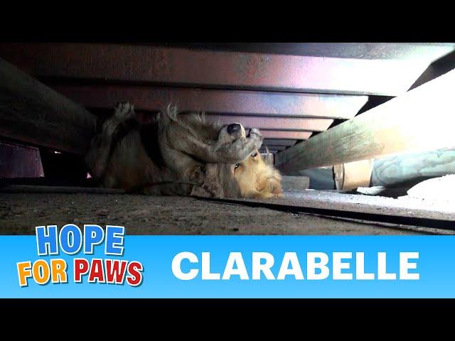 Salvano un cane randagio e la sua reazione è commovente