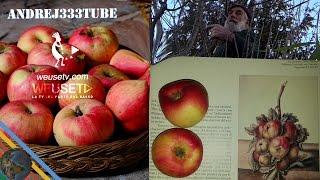 Potatura del melo (cultivar antica) - Giardinaggio, innesti e potature