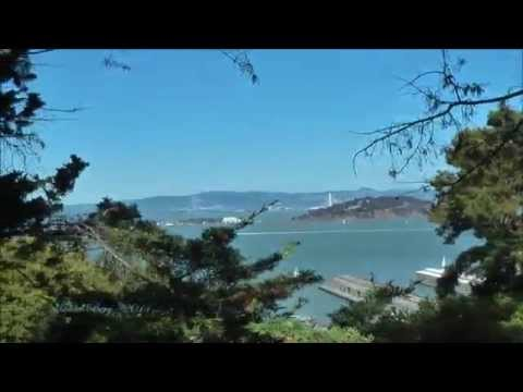 """Searching for the """"Wild Parrots of Telegraph Hill"""" San Francisco"""
