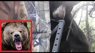 Медведь пулей зелетел на дерево к охотникам
