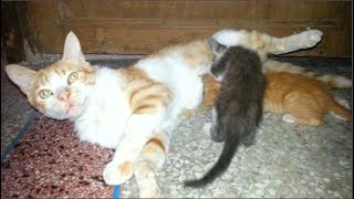 Orange takes care of the rescued kittens