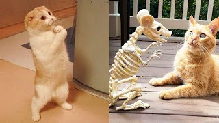 Funniest Animals - Best Of The 2021 Funny Animal Videos #50