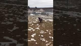 Good Play with Dog-Selective Dog