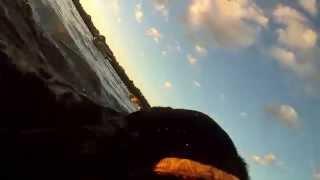 Duck Boat Dog Training
