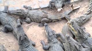 Binh chau Crocodile Farm